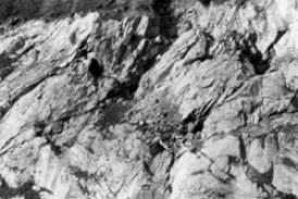 Rudna Glava