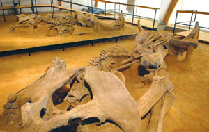 Rep mamuta
