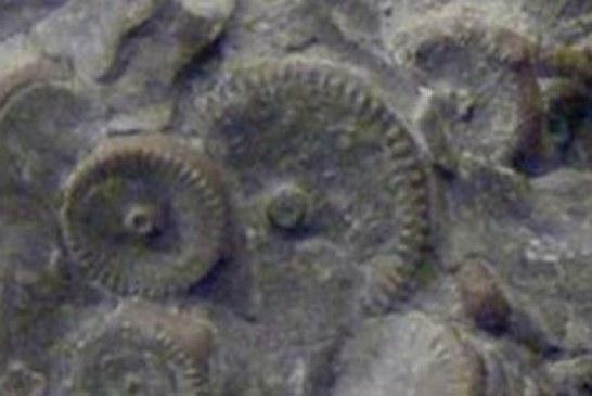 Šokantno otkriće: Pronađena mašina stara 400 miliona godina?