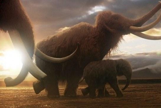Руси на корак до клонирања мамута