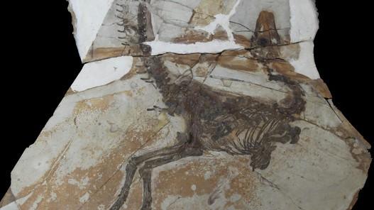 Fosil star 125 miliona godina pružio je nove informacije o izgledu  životinja koje su nekada hodale Zemljom