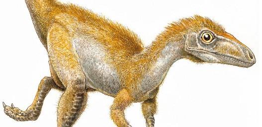 Do sada su naučnici pretpostavke o izgledu dinosaurusa zasnivali na izgledu savremenih ptica i gmizavaca. Britanski tim otkrio je da su  Sinasauropteriksa krasila žuta i crvenkasta perca