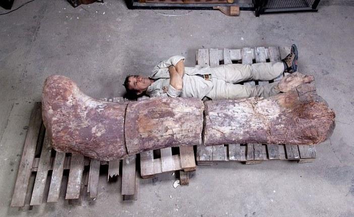 Otkriven fosil najvećeg dinosaurusa koji je ikad hodao Zemljom