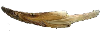 Inuitski bodež od kljova morža