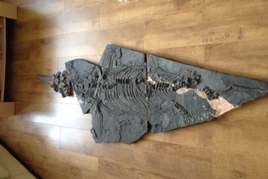 Amaterski lovac na fosile otkrio kompletan skelet drevnog morskog reptila