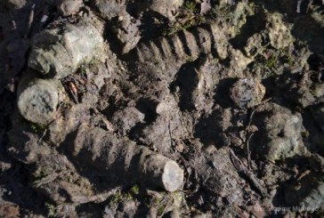 Bez komentara RTS 26. novembar 2014. Fosili na Makovištu kod Kosjerića