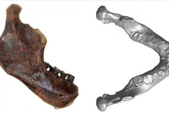 Ribari pronašli fosil nove vrste primitivnog čoveka