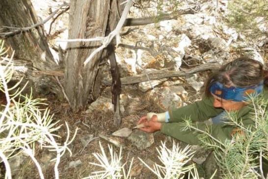 Puška bila naslonjena na grm duže od jednog veka