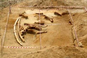 Blace Krilo Tajnu: Pronađen skelet mamuta star više od 10 miliona godina