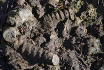 Fosili na Makovištu kod Kosjerića – Jutarnji program RTS