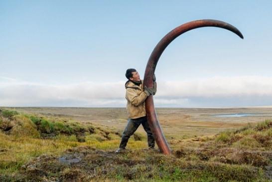 O mamutima i ljudima