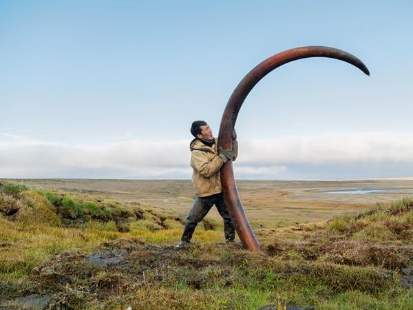 Pošto je hiljadama godina ležala zamrznuta u jednom sibirskom rečnom koritu, ova prastara kljova mamuta predstavlja finansijsku blagodet za tragača koji ju je pronašao.