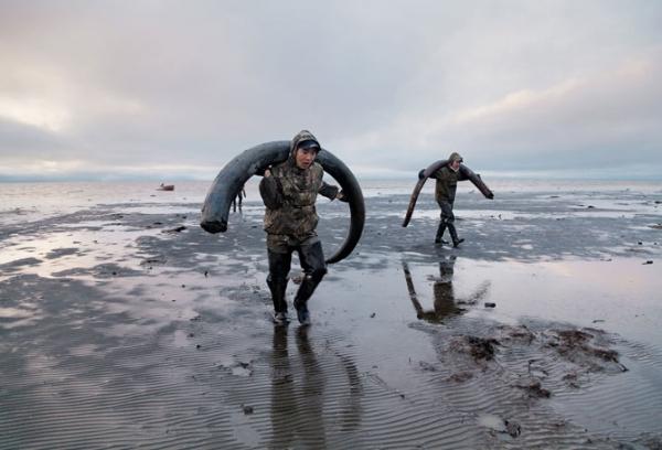 Tragači istovaruju kljove na severnoj obali Sibira, gde će čekati transport uz reku Janu. Jedna dobra kljova može da izdržava čitavu porodicu tokom duge zime, ali se neki tragači vraćaju praznih ruku.