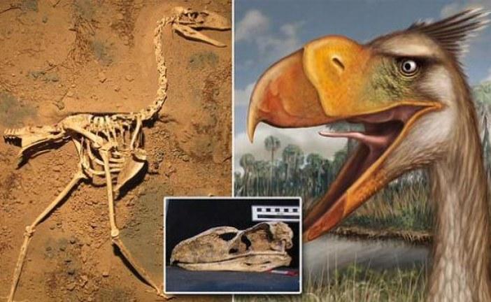 Otkrivena do sada nepoznata i izumrla vrsta ptica