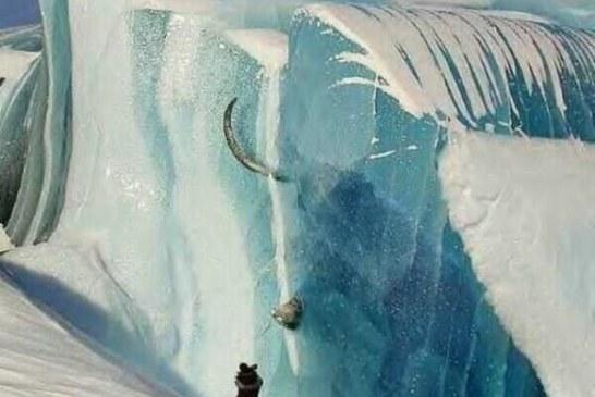 Jedna od najvećih svetskih misterija: U utrobi zaleđenih mamuta u Sibiru pronađeno je nesvareno tropsko bilje!
