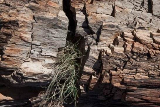 """Kraljevo: Propada """"Kamena šuma"""", redak fenomen star milion godina"""