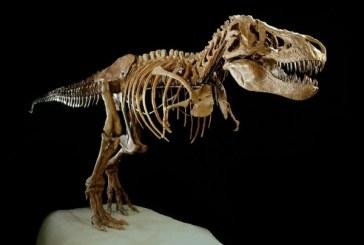 10 stvari koje niste znali o dinosaurima
