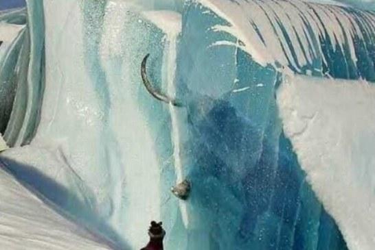 U utrobi zaleđenih mamuta u Sibiru pronađeno je nesvareno tropsko bilje!