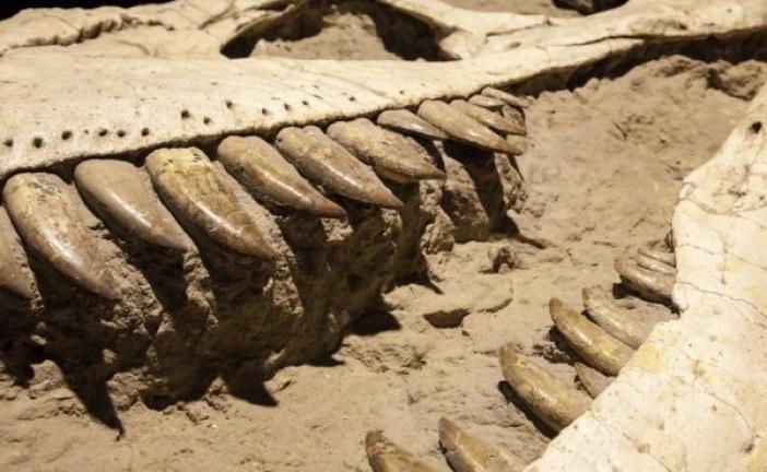 Pronađeni ostaci dinosaura koji su uginuli u vreme pada asteroida?