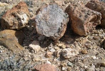 Najraznovrsnija svetska kolekcija fosilnih ostataka biljaka i životinja iz doba jure pronađena u Argentini